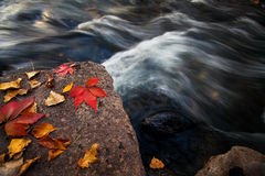 Autumn leaves in the rock Royalty Free Stock Photo