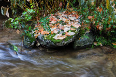 Autumn Leaves on Rock at Stream Stock Photos