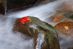 Autumn leaves on rock in stream. Autumn leaves on wet rocks in flowing stream with motion blur effect Stock Photo
