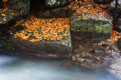Autumn Leaves on Rocks at Creek Royalty Free Stock Photography