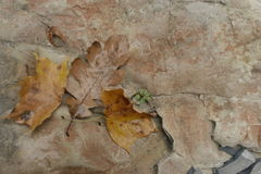 Autumn leaves on the rocks Stock Photo