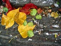 Autumn Leaves On rocks Stock Photos