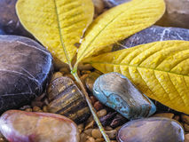 Autumn leaves on rocks Stock Photography