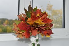 Autumn Leaves Rood en geel stock afbeeldingen
