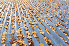 Autumn leaves on roof Stock Image