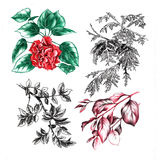 Autumn leaves and rose flower Stock Image