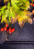 Autumn leaves and rose hips  on dark wooden background Stock Photography