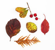 Autumn leaves, rosehip, horse chestnut and twig Stock Photos