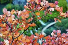 Autumn Leaves rosso Fotografie Stock