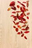 Autumn Leaves rosso su un fondo di legno Fotografie Stock