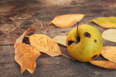 Autumn leaves and rotten apple Royalty Free Stock Photo
