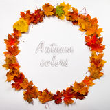 Autumn leaves round frame Stock Image