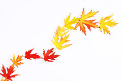 Autumn leaves in a row on white background Royalty Free Stock Photo