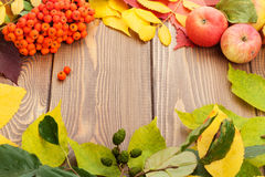 Autumn leaves, rowan berries and apples over wood background Royalty Free Stock Image