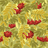 Autumn leaves and rowan berries Royalty Free Stock Images