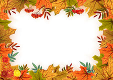 Autumn leaves, rowan and flowers. Template frame Royalty Free Stock Photos
