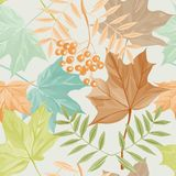 Autumn leaves and rowan pattern Stock Photography