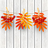 Autumn leaves with rowan on wood Royalty Free Stock Photo