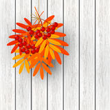 Autumn leaves with rowan on wooden background 2 Royalty Free Stock Photography