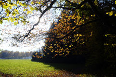 Autumn leaves and rural field, Savoy, France Stock Image