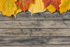 Autumn leaves on the rural wood planks Royalty Free Stock Images