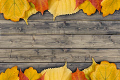 Autumn leaves on the rural wood planks Stock Images