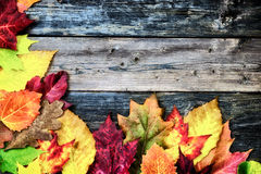 Autumn Leaves on Rustic Boards - Corner Border Royalty Free Stock Photos