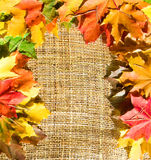 Autumn leaves on sacking. Colorful border made of autumn leaves on sacking texture background royalty free stock photos