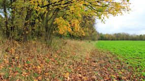 Autumn Leaves And salad Field Royalty Free Stock Image