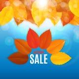 Autumn Leaves Sale Banner brillant Carte de remise d'affaires Illustration de vecteur Photo stock