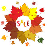 Autumn  leaves. Sale Stock Images