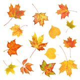 Autumn Leaves Satz bunte Fallblätter lokalisiert auf Weiß Lizenzfreie Stockbilder