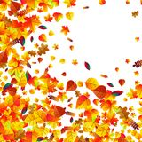 Autumn leaves scattered background. Oak, maple and rowan. Autumn leaves scattered background with oak, maple and rowan Royalty Free Illustration
