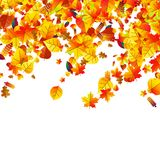 Autumn leaves scattered background. Oak, maple and rowan. Autumn leaves scattered background with oak, maple and rowan vector illustration