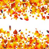 Autumn leaves scattered background. Oak, maple and rowan. Autumn leaves scattered background with oak, maple and rowan Vector Illustration