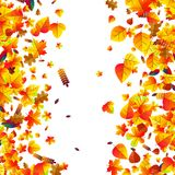 Autumn leaves scattered background. Oak, maple and rowan. Autumn leaves scattered background with oak, maple and rowan Stock Photography
