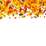 Autumn leaves scattered background. Oak, maple and rowan. Autumn leaves scattered background with oak, maple and rowan Stock Photos
