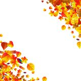Autumn leaves scattered background. Oak, maple and rowan. Autumn leaves scattered background with oak, maple and rowan Stock Illustration