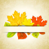 Autumn leaves on scratched paper background Stock Image