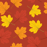 Autumn leaves seamless background Stock Photos