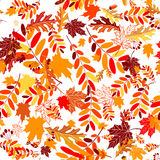 Autumn leaves seamless background Royalty Free Stock Images