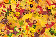 Autumn leaves, seamless background Stock Photos