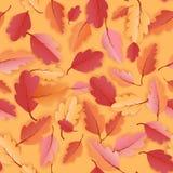 Autumn Leaves Seamless Background, het Patroon van het Dalingsmalplaatje met mooie bladeren Royalty-vrije Stock Afbeelding