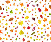 Autumn leaves seamless background. Multicolored fall leaves different angles pattern on white background. Cartoon style vector illustration Vector Illustration