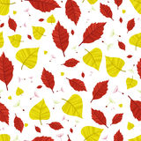 Autumn leaves. Seamless background Stock Images