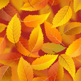 Autumn leaves seamless background Royalty Free Stock Image