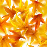 Autumn leaves seamless background Royalty Free Stock Photo