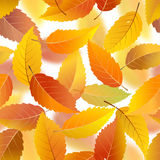 Autumn leaves seamless background Stock Image