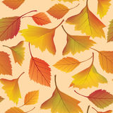 Autumn leaves seamless pattern background Stock Photos