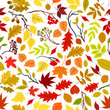 Autumn leaves seamless pattern background. Vector leaf and stem elements. Tree seeds and fruits. Foliage of oak, maple, birch, aspen, chestnut, elm, poplar Stock Images